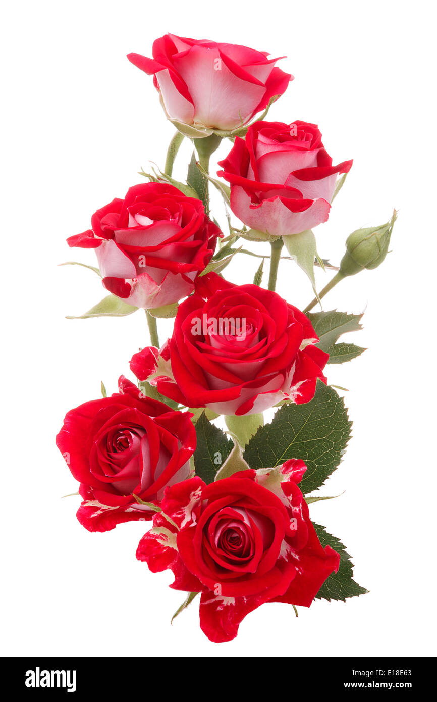 Red Rose Flower Bouquet Isolated On White Background