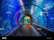 Shark Reef Aquarium Mandalay Bay Hotel And Casino