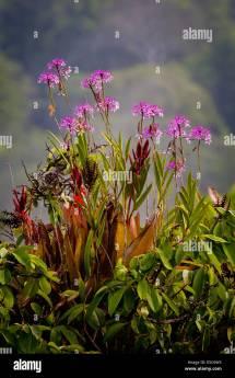 Rainforest Flowers Stock &
