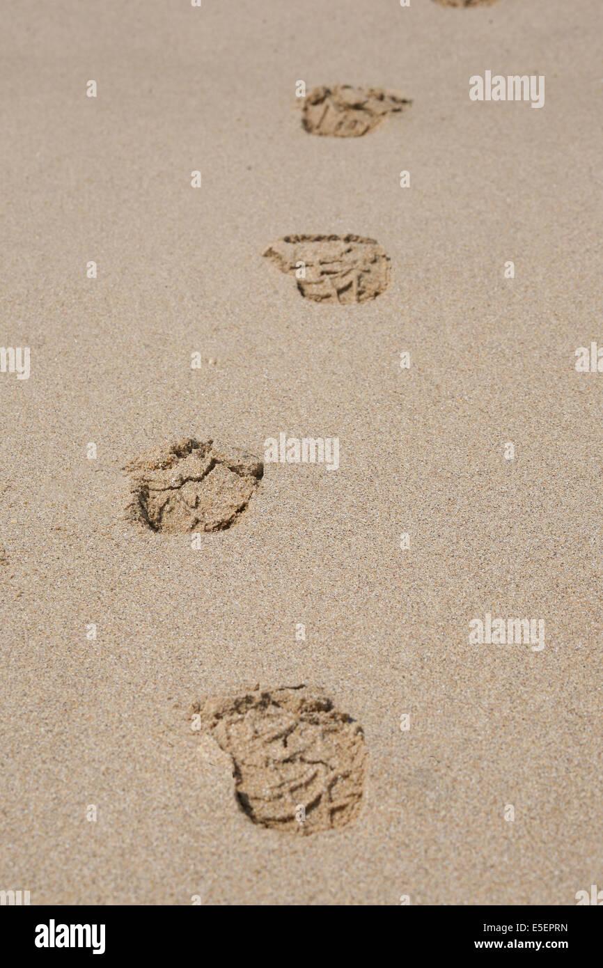 Trace De Pas Dans Le Sable : trace, sable, Traces, Sable, Resolution, Stock, Photography, Images, Alamy