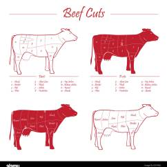 Dairy Cow Parts Diagram Sony Cdx L510x Wiring Butcher Stock Photos And
