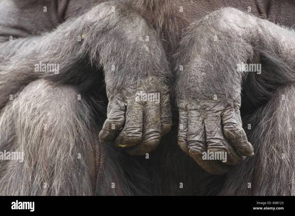 20 Ape Hand Pictures And Ideas On Meta Networks