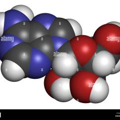 Adp Molecule Diagram Labeled Audio Jack Wiring Atp Stock Photos And Images Alamy