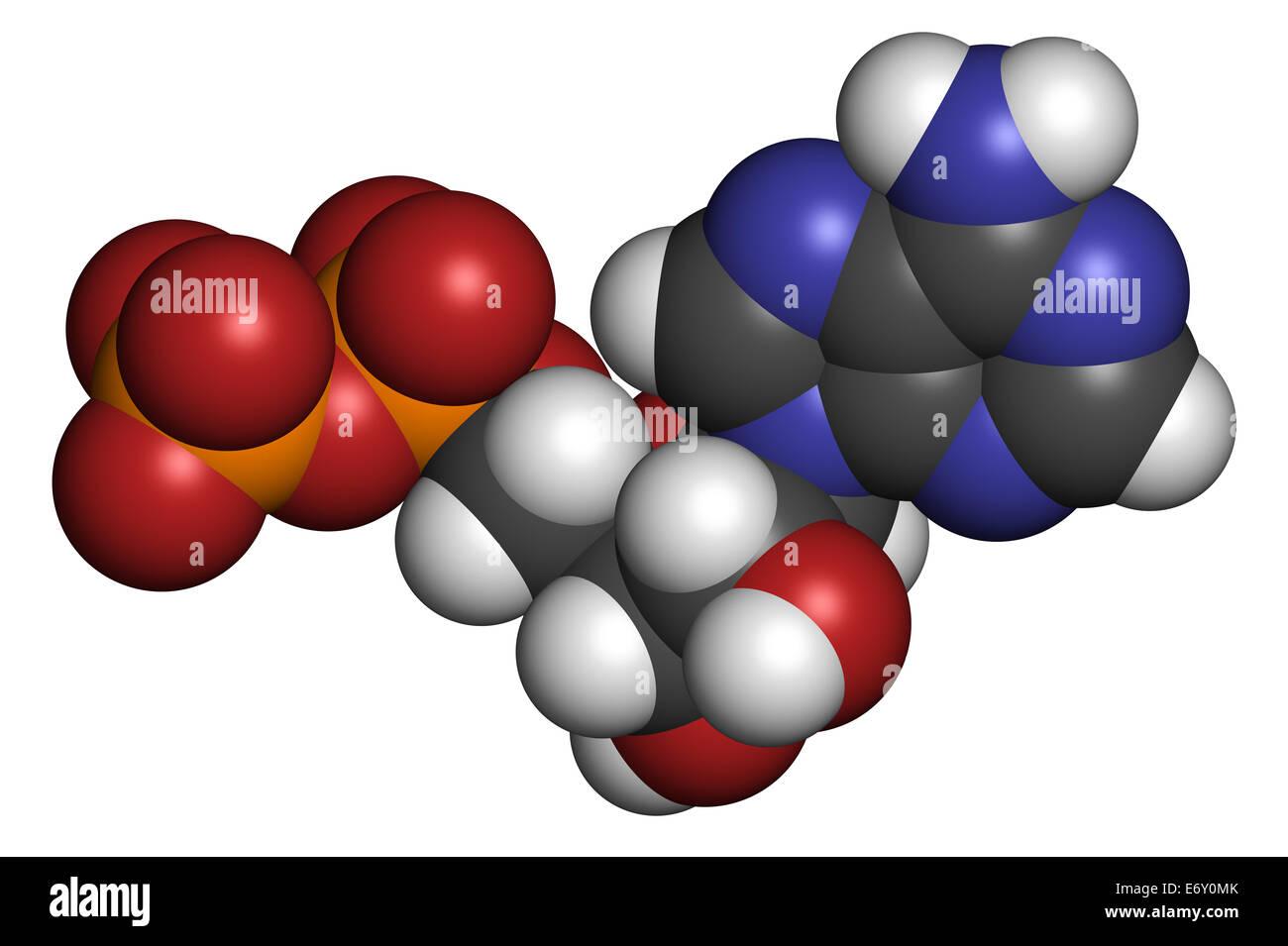 adp molecule diagram labeled 99 ford ranger xlt radio wiring adenosine triphosphate atp stock photos and