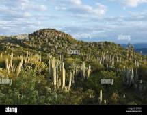 Hidalgo Mexico Landscape