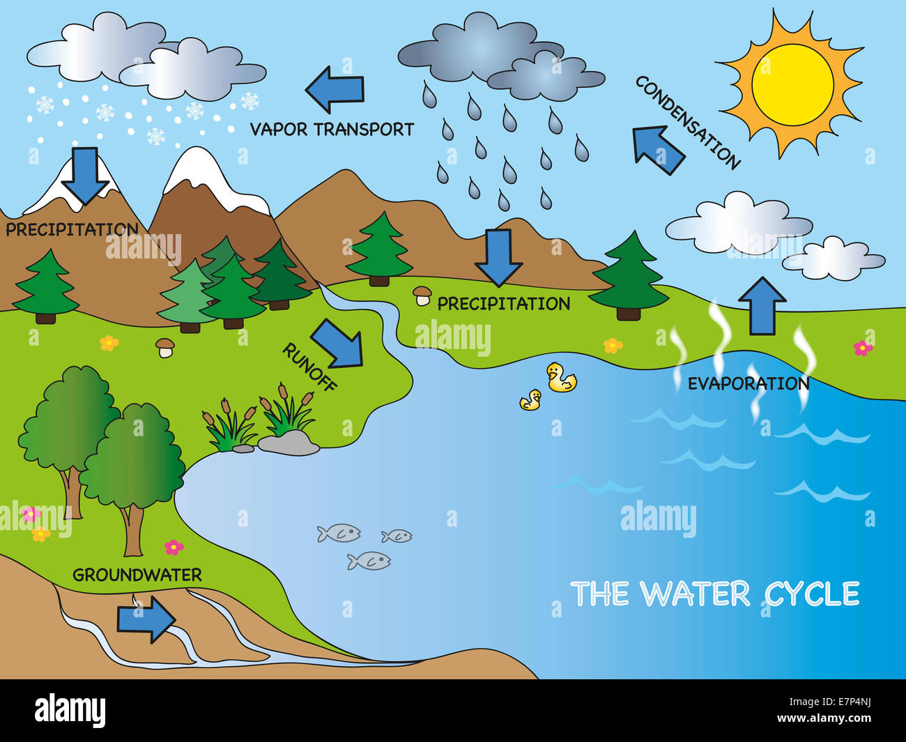 hight resolution of illustration of funny water cycle stock image
