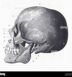 engraved illustrations of the bones of the head from iconographic encyclopedia of science literature and [ 1300 x 1241 Pixel ]
