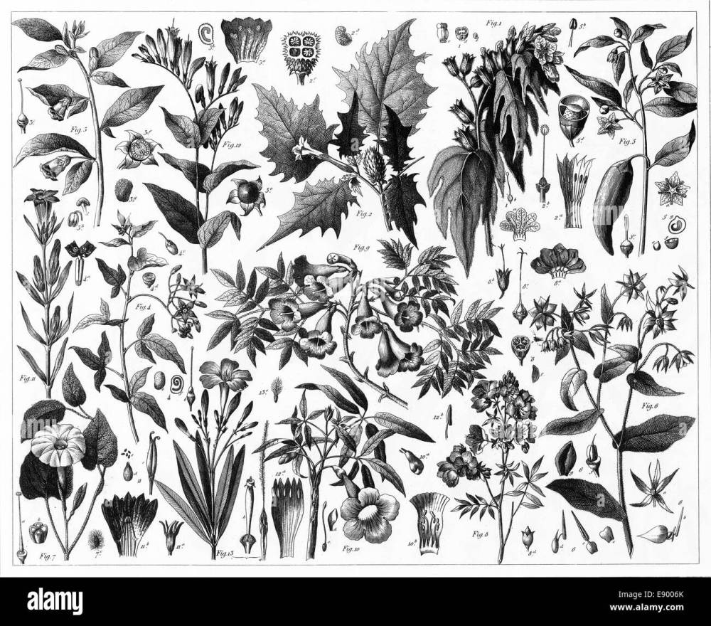 medium resolution of engraved illustrations of toxic plants from iconographic encyclopedia of science literature and art published in 1851