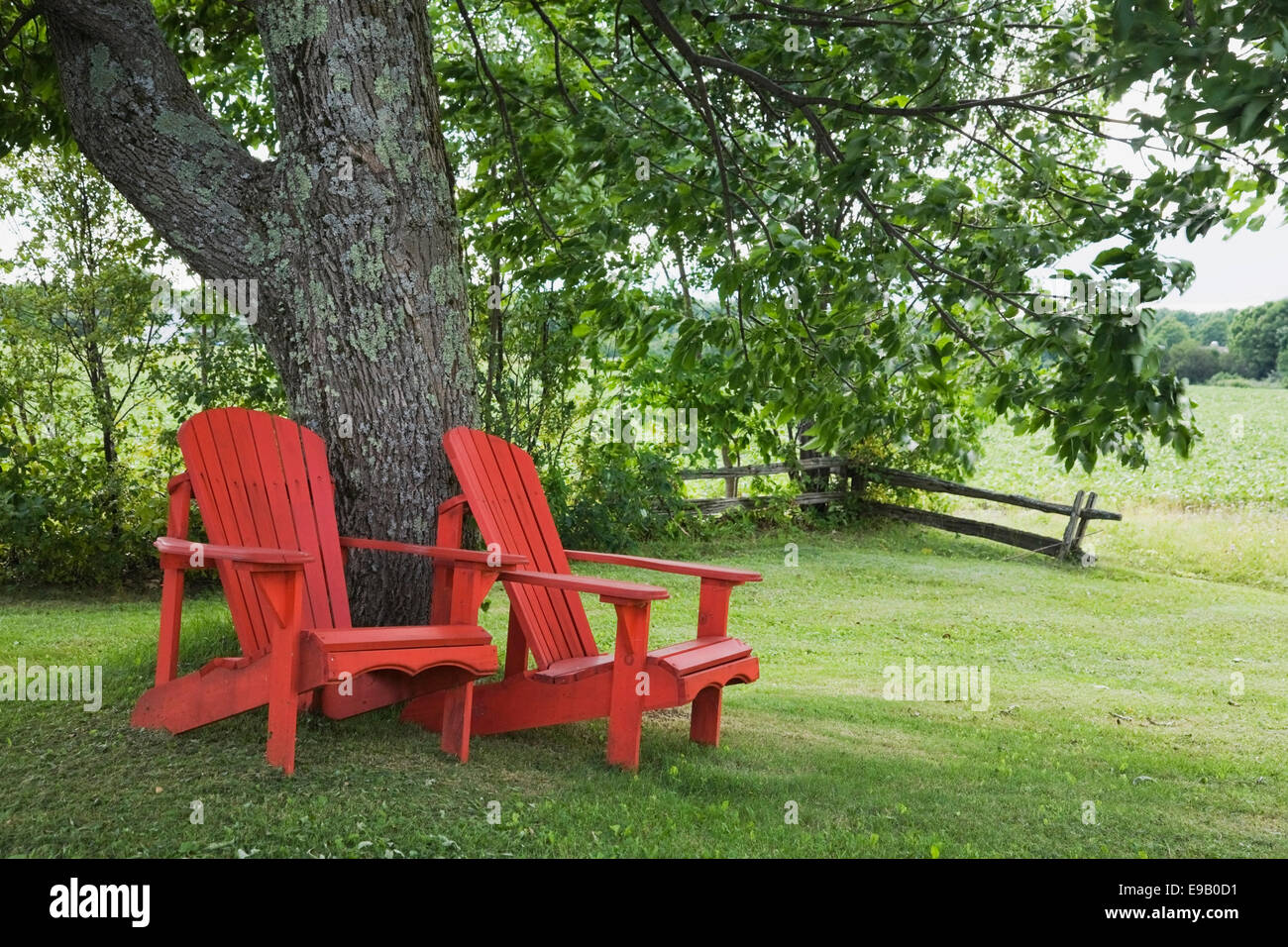 Red Adirondack Chairs Two Red Wooden Adirondack Chairs Under A Tree In A