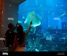 Dubai Aquarium Stock &