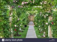 Rose pergola - David Austin Rose Garden, UK Stock Photo ...