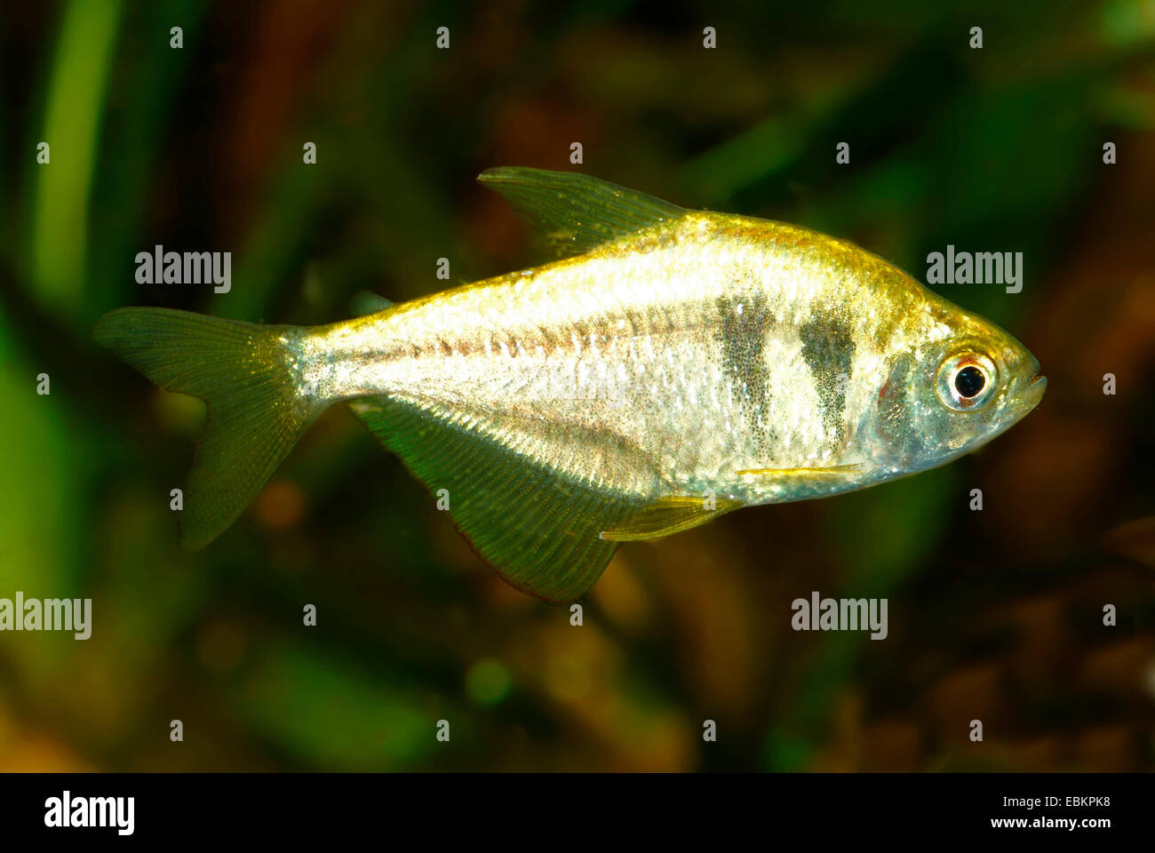Fish Names In Alphabetical Order