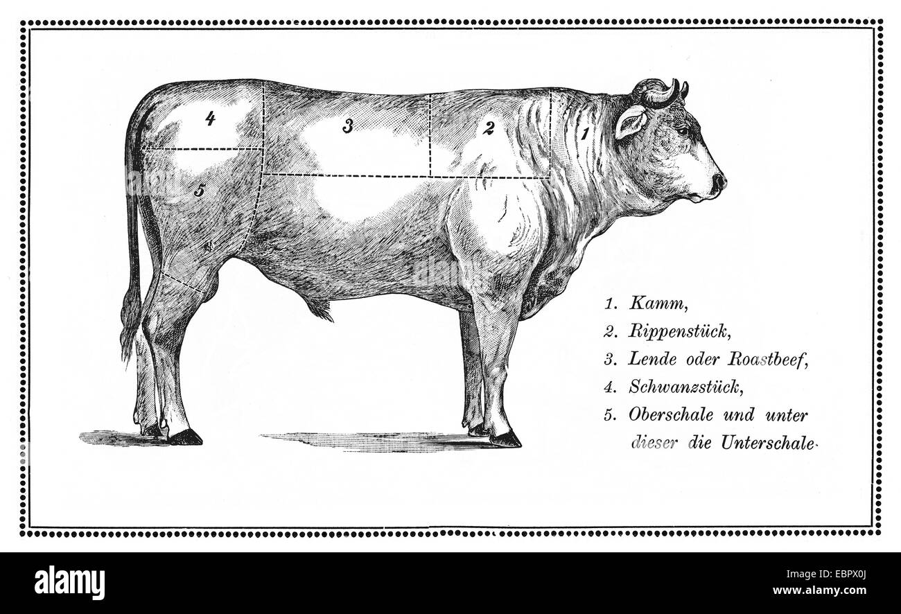 hight resolution of an old beef chart with numbered cuts stock image