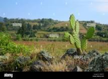 Mexico Cultural Landscape