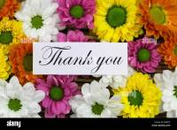 Thank you card with colorful santini flowers Stock Photo ...