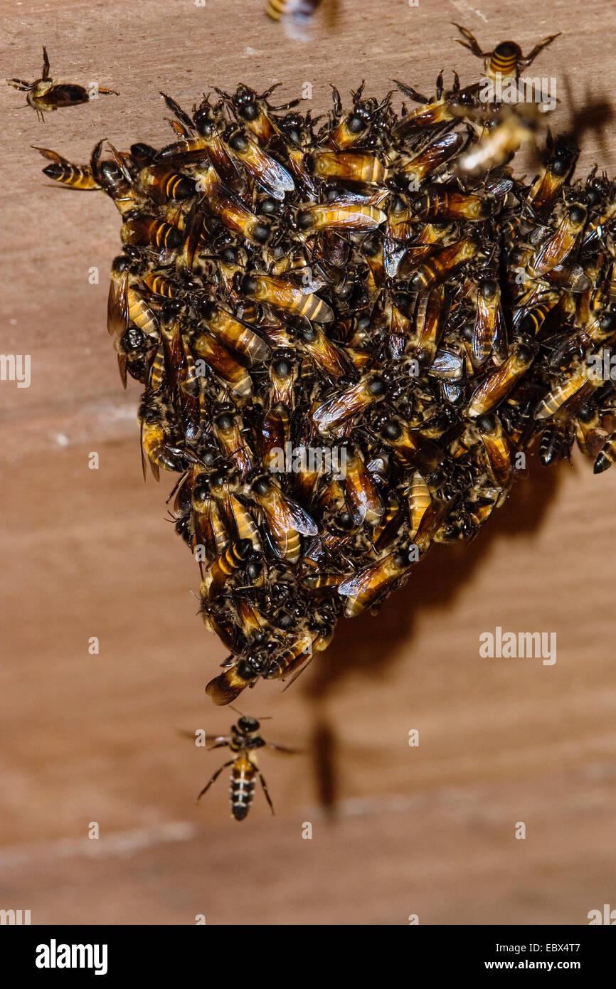 wild bees on wooden