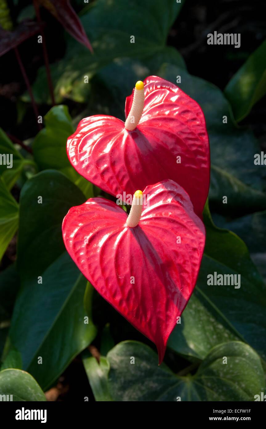 heart shaped flowers stock
