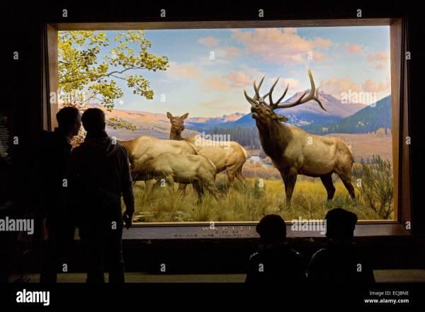 Usa York Manhattan Museum Of Natural History North America Stock 76621706 - Alamy