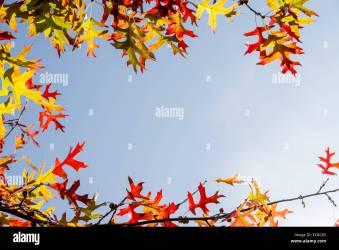 border leaves autumn alamy