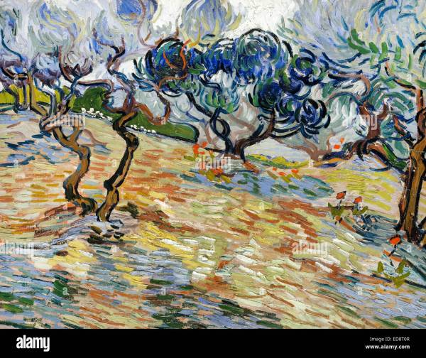 Olive Trees Vincent Van Gogh Painting