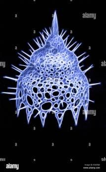 Radiolarians Pod Lat. Radiolaria - Unicellular