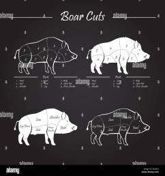 wild hog boar game meat cut diagram scheme elements set on chalkboard stock [ 1300 x 1390 Pixel ]