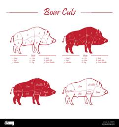 wild hog boar game meat cut diagram scheme elements set red on white background [ 1300 x 1390 Pixel ]
