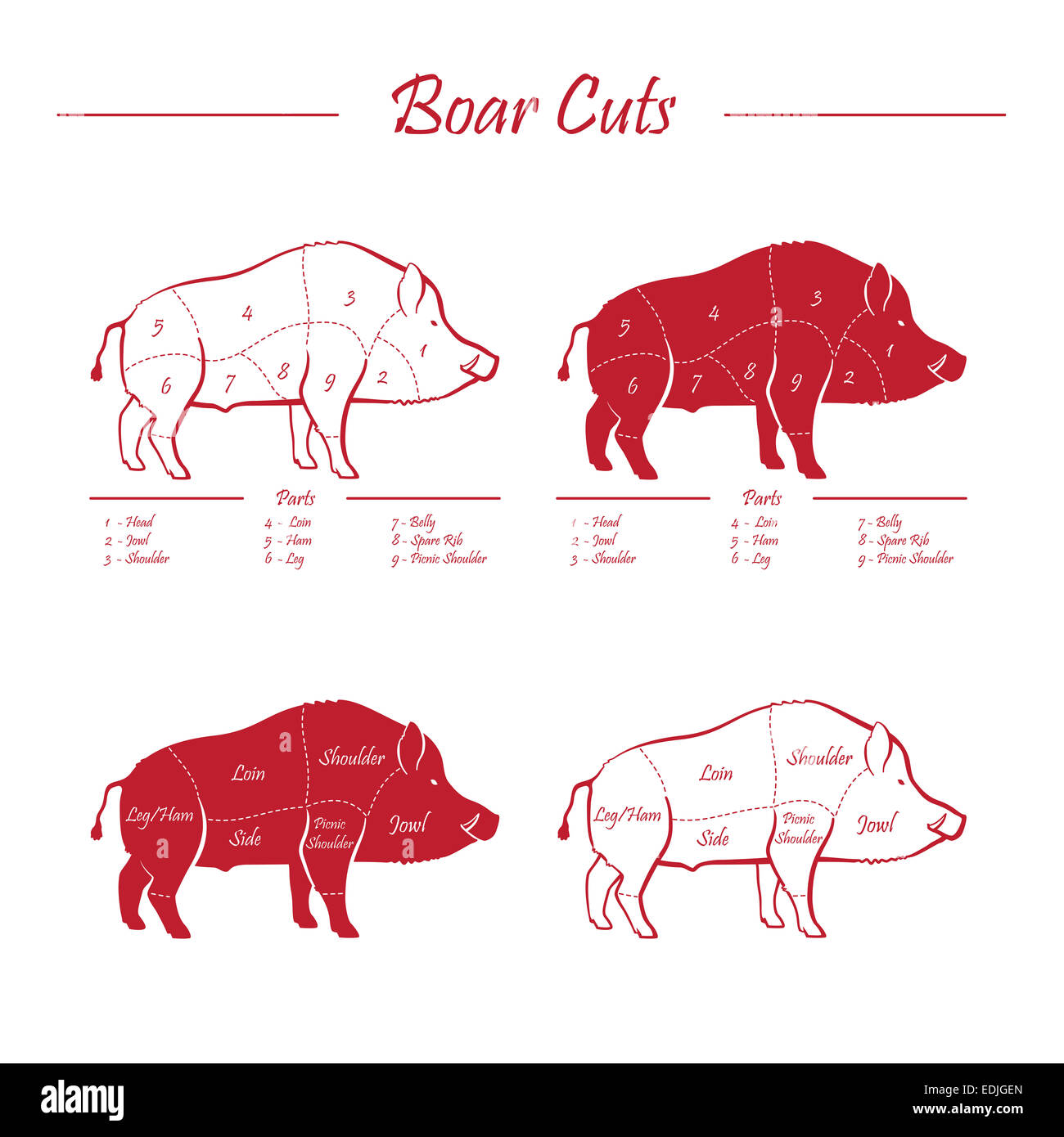hight resolution of wild hog boar game meat cut diagram scheme elements set red on white background