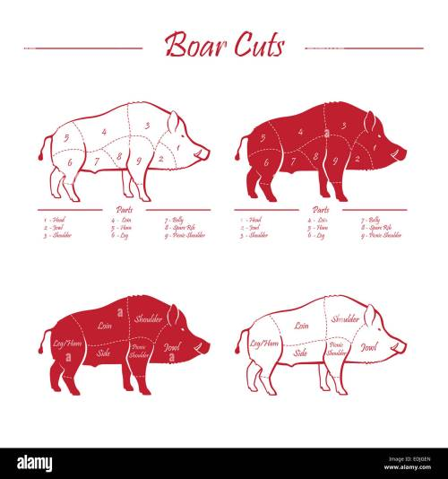 small resolution of wild hog boar game meat cut diagram scheme elements set red on white background