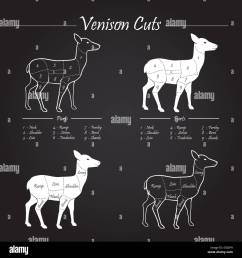 venison meat cut diagram scheme elements set on chalkboard stock image [ 1300 x 1390 Pixel ]