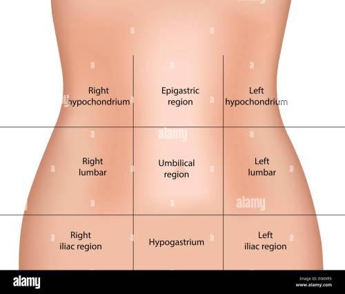 small resolution of abdominal regions stock image
