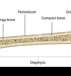 anatomy of bone labeled diagram [ 1300 x 749 Pixel ]