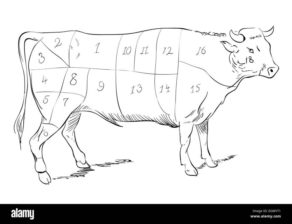 medium resolution of vector drawing of a beef with cutting parts stock image