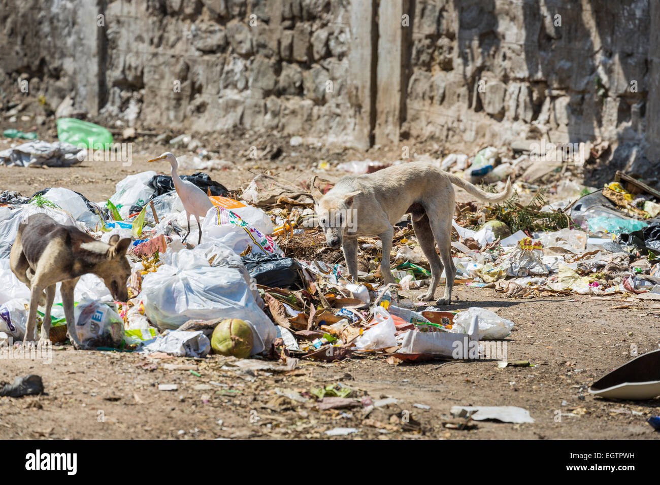 Image result for animals scavenging landfill
