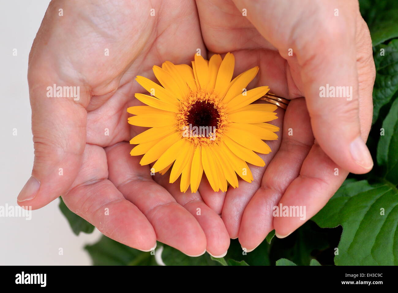 hands cupping stock photos