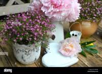 Garden Peonies shabby chic flowers Stock Photo, Royalty ...