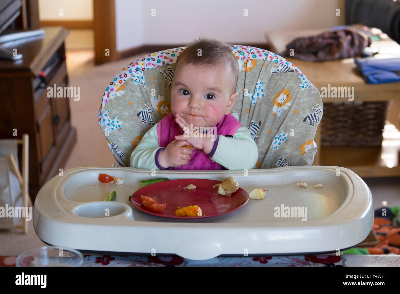 Baby Food Chair 8 Month Old Baby Girl Eating Food In High Chair Stock