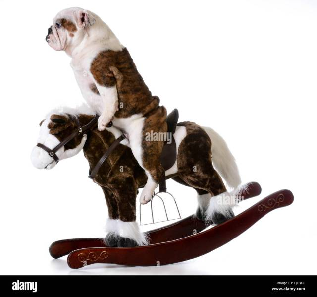 country dog - english bulldog riding a rocking horse on white stock