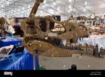 Dinosaur Bones Fossils Stock &