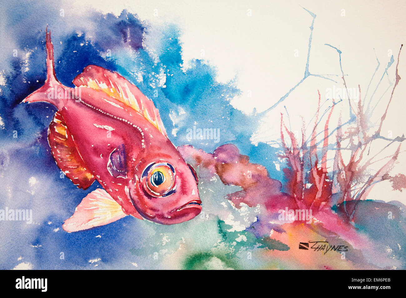 bigeye squirrelfish stock photos