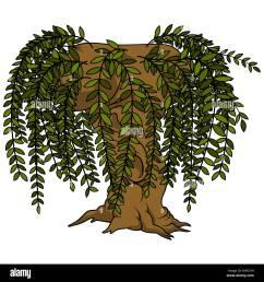 willow tree stock vector [ 1300 x 1390 Pixel ]