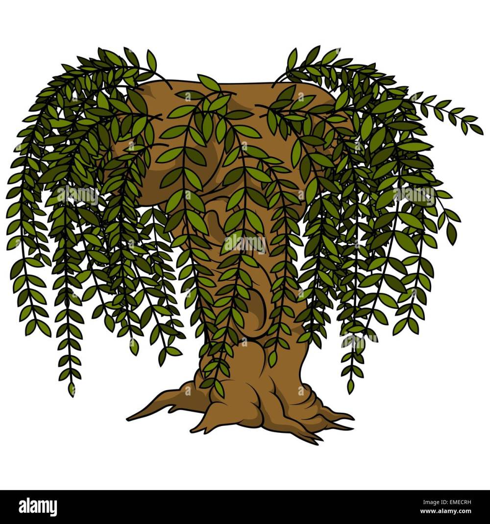 medium resolution of willow tree stock vector