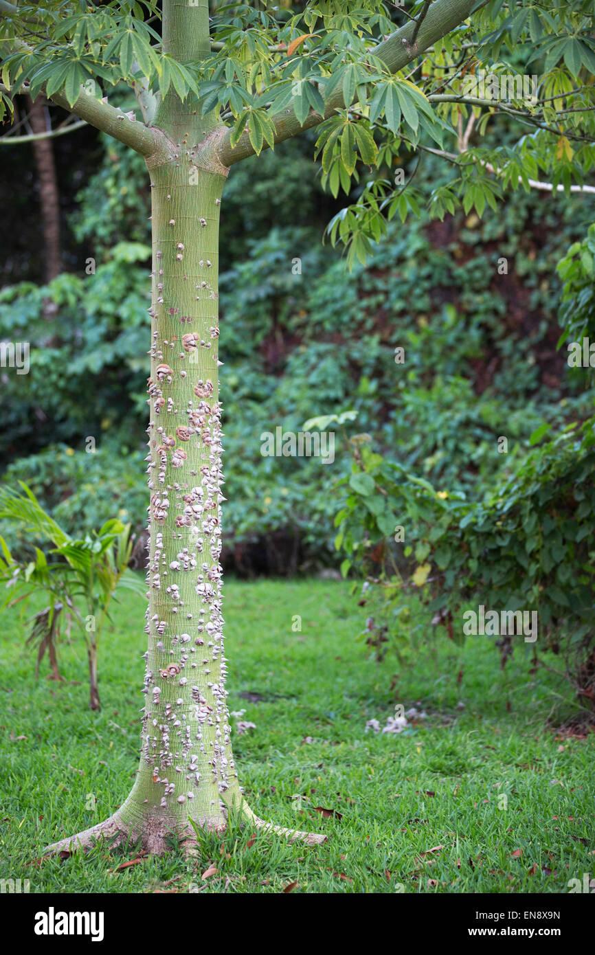 thorny tree trunk stock