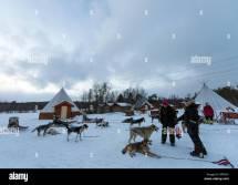 Husky Farm And Dog Sledding Alta Norway Scandinavia Europe