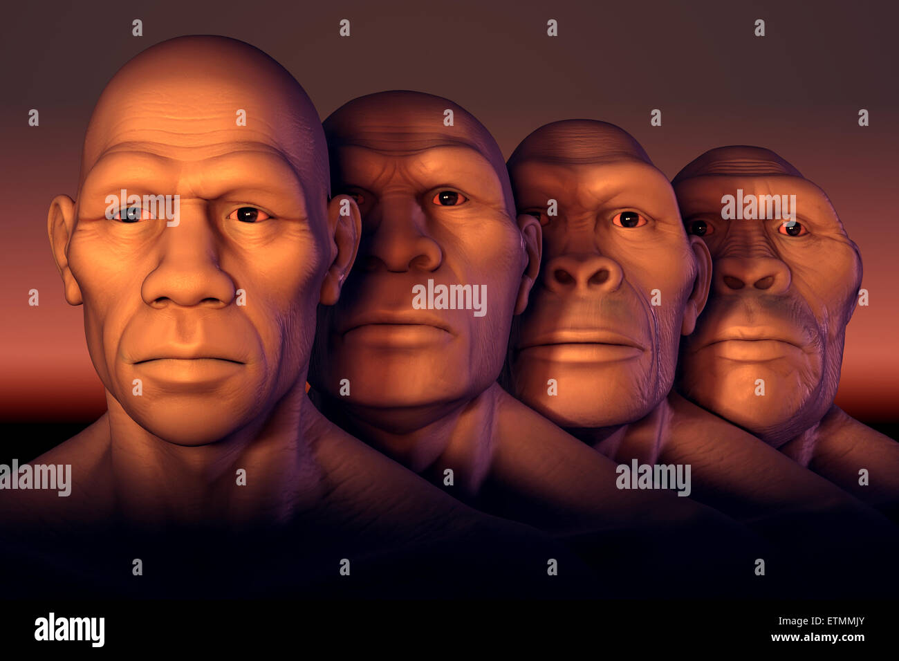 Conceptual Image Showing Four Stages Of Human Evolution