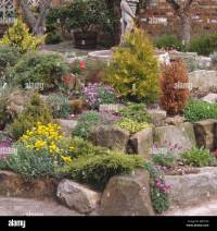 Low conifers and colorful alpines in seventies rockery ...