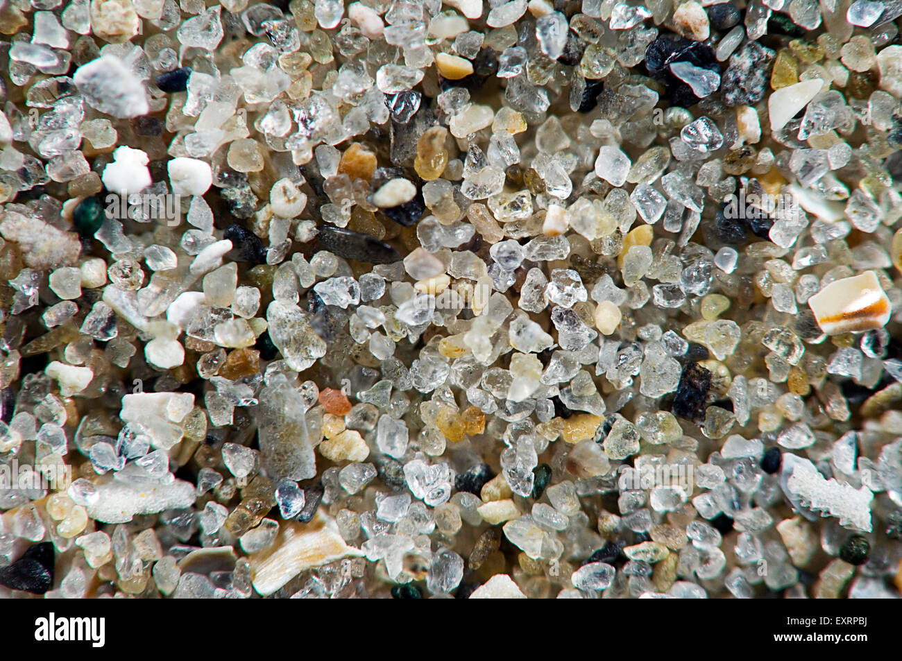 Close Up Of Sea Sand Grains Containing Shell Fragments
