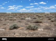 Desert Mexico Border