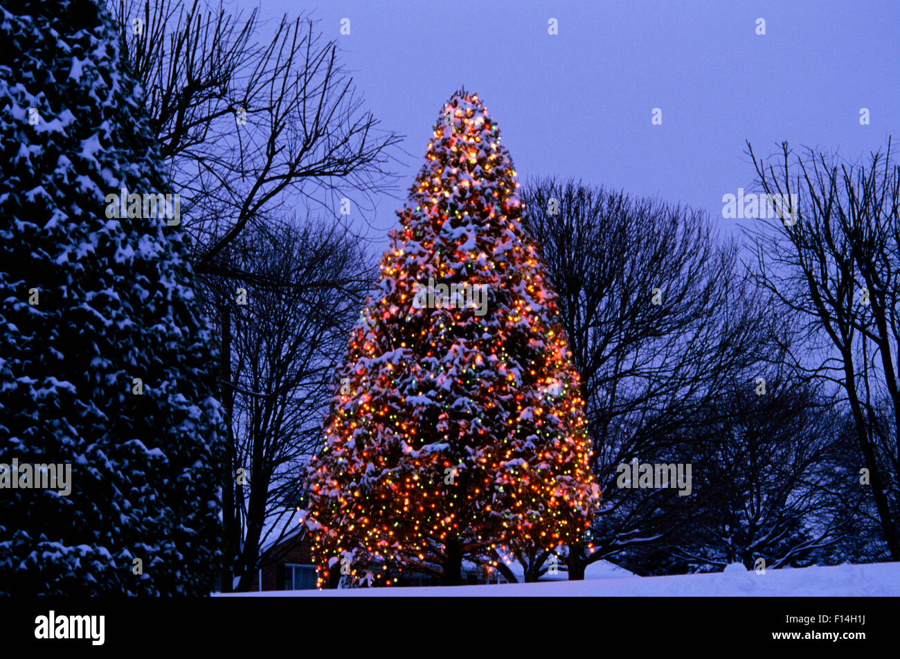 https www alamy com stock photo lighted outdoor christmas tree at night 86767678 html