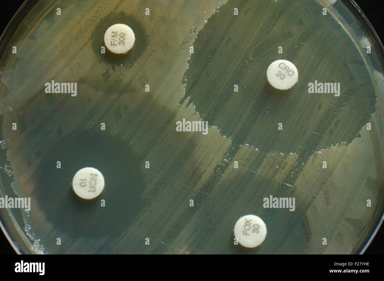 Bacterial Stock Photos Amp Bacterial Stock Images